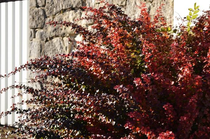 Super schöne Rottöne machen den Herbst aus.