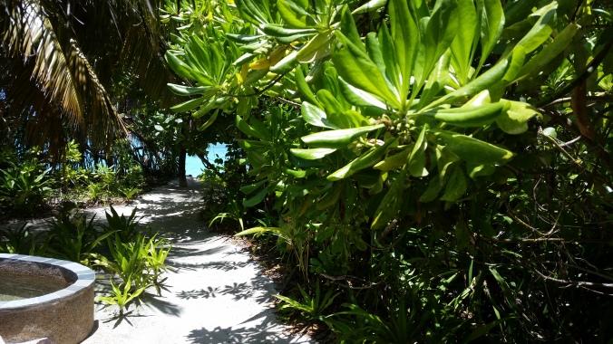 Hier entlang sind wir zu unserem eigenen Strandzugang geschlendert. Wie schön... :)