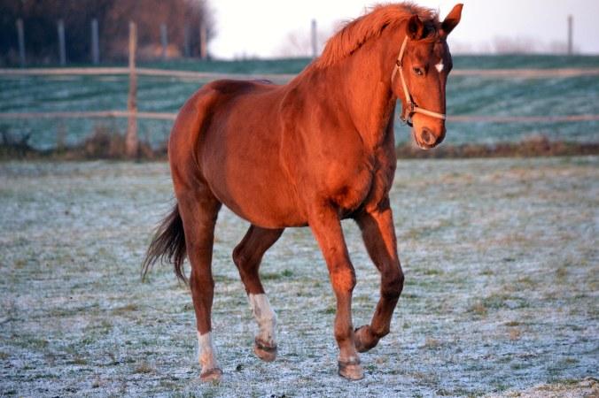 Das Pferd zeigt, was es kann...