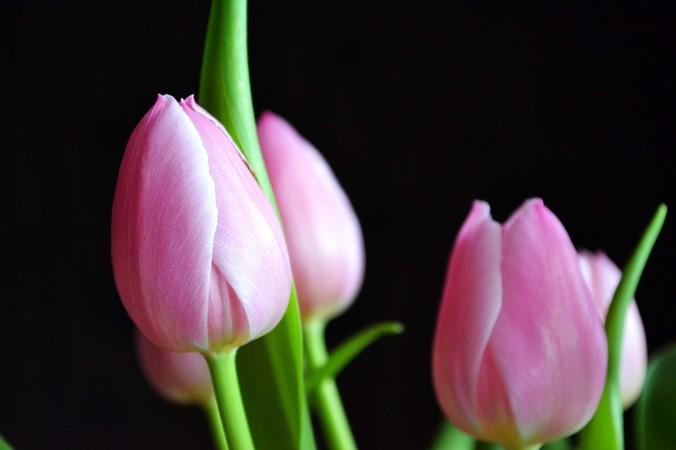 Ein paar hübsche Blumenfotos für dich!